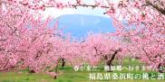 春が来た。桃源郷へ行きませんか?「福島県桑折町の桃と酒」