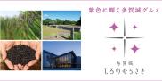 多賀城しろのむらさき特集
