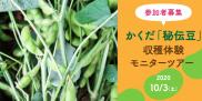 【参加者募集】かくだ「秘伝豆」収穫体験モニターツアー