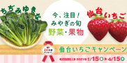 今、注目!みやぎの旬 野菜・果物<br />総計210名様に豪華プレゼントが当たる仙台いちごキャンペーン実施中!