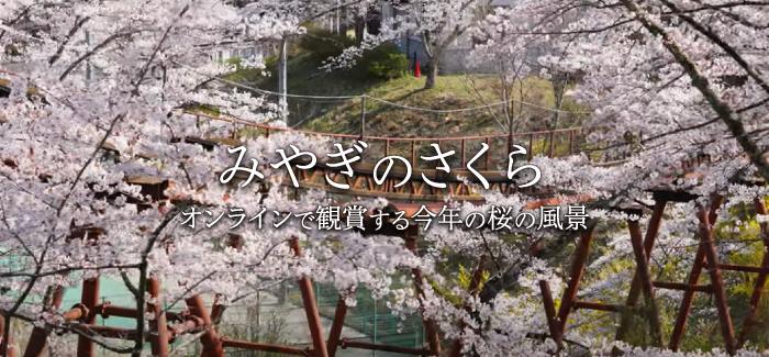 みやぎのさくら 2021 ~オンラインで観賞する今年の桜の風景~