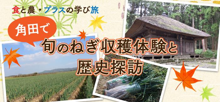 【参加者募集】角田で旬のねぎ収穫体験&歴史探訪ツアー